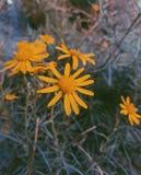 wildflower fotografia de stock