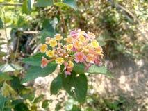 wildflower стоковая фотография rf