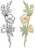 Wildflower. Hand-drawn in loose style with soft colors. Outlines and color on separate layers, global colors used for easy change Royalty Free Stock Photos