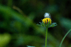 wildflower immagini stock