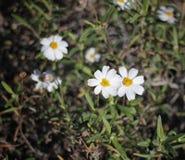wildflower Photos libres de droits