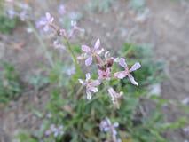 wildflower royalty-vrije stock fotografie