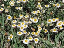 wildflower stock foto's