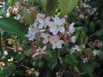 wildflower stock fotografie