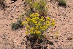 wildflower stock afbeeldingen