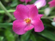 wildflower Lizenzfreies Stockbild