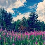 wildflower Foto de Stock Royalty Free