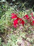 wildflower Zdjęcie Royalty Free