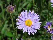 wildflower Fotos de archivo libres de regalías
