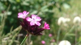 wildflower Royalty-vrije Stock Foto