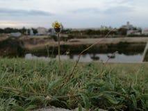 wildflower Royalty-vrije Stock Afbeeldingen