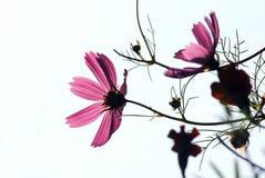 Wildflower alla luce solare luminosa Immagini Stock Libere da Diritti