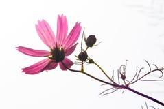 Wildflower alla luce solare luminosa Fotografia Stock