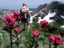 Wildflower And Hiker Royalty Free Stock Photography