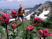Wildflower And Hiker Stock Photo