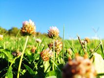 Wildflower. Ant's view of wild flowers on a sunny day Stock Photography