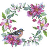 Wildflower apple flower wreath in a watercolor style isolated. Royalty Free Stock Photos