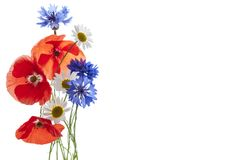 Wildflower arrangement Stock Images