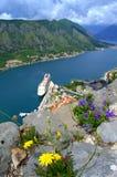 Wildflower auf Wand über Kotor-Bucht Lizenzfreie Stockbilder