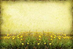 Wildflower Background Stock Image