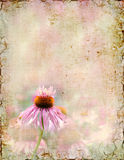 Wildflower Background Royalty Free Stock Photo