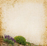 Wildflower Background Stock Photos