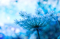 Wildflower background Stock Photos