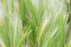 Wildflower background Stock Photo