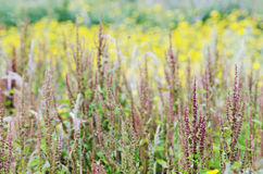 Wildflower background Royalty Free Stock Images