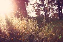 Wildflower background. Instagram effect photo Royalty Free Stock Image