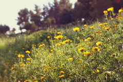 Wildflower background. Instagram effect photo Stock Photos