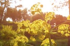 Wildflower background. Instagram effect photo. Wildflower background. Instagram effect photo Stock Photography