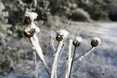 Wildflower background in winter forest Stock Photos