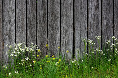 Wildflower and Barnwood Stock Images