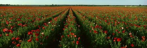 Wildflower-Bauernhof, Lizenzfreie Stockfotografie