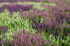 The wildflower is so beautiful. On winter season Royalty Free Stock Image