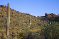 Arizona Desert Spring Royalty Free Stock Images