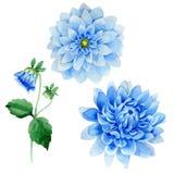 Wildflower blue dahila flower in a watercolor style isolated. Wildflower dahila flower in a watercolor style isolated. Full name of the plant: blue dahila vector illustration