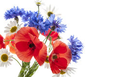 Wildflower bouquet Royalty Free Stock Photography