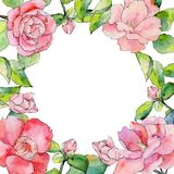 Wildflower camellia flower frame in a watercolor style. Stock Photography