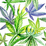 Wildflower cannabis flower pattern in a watercolor style. Full name of the plant:cannabis. Aquarelle wild flower for background, texture, wrapper pattern Stock Photography