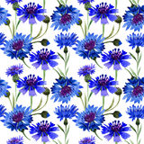 Wildflower carnation flower pattern in a watercolor style . Full name of the plant: blue carnation field. Aquarelle wild flower for background, texture Stock Photos