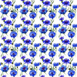Wildflower carnation flower pattern in a watercolor style isolated. Full name of the plant: blue carnation field. Aquarelle wild flower for background, texture Royalty Free Stock Images