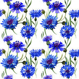 Wildflower carnation flower pattern in a watercolor style isolated. Full name of the plant: blue carnation field. Aquarelle wild flower for background, texture Stock Photos