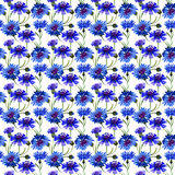 Wildflower carnation flower pattern in a watercolor style isolated. Full name of the plant: blue carnation field. Aquarelle wild flower for background, texture Royalty Free Stock Photos