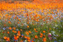 Wildflower carpet Royalty Free Stock Image