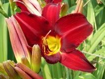 Wildflower centrado amarelo imagem de stock royalty free
