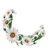 Wildflower chamomile flower frame in a watercolor style . Stock Photos