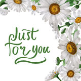 Wildflower chamomile flower frame in a watercolor style isolated. Stock Image