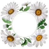 Wildflower chamomile flower frame in a watercolor style isolated. Royalty Free Stock Image
